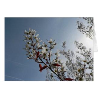Bush floreciente blanco el Sun Tarjeton