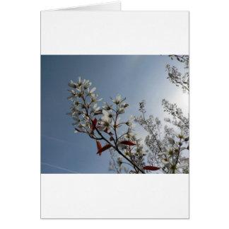 Bush floreciente blanco el Sun Tarjeta