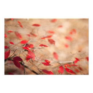 Bush Jeweled rojo Impresion Fotografica