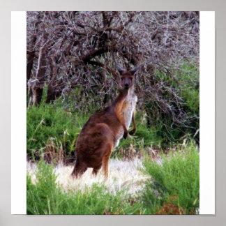 Bush Kangaroo  Print