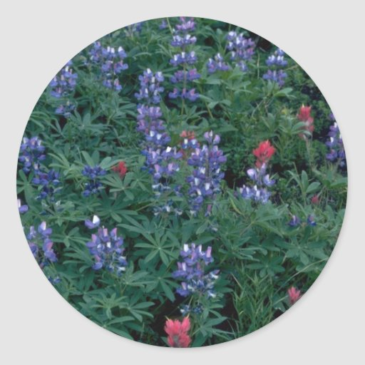 Bush Of Blue And Red Flowers Classic Round Sticker
