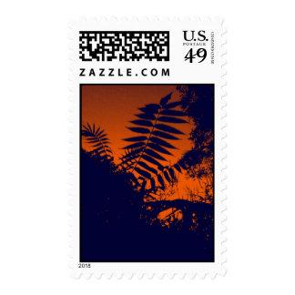 Bush Orange Sunset Stamp