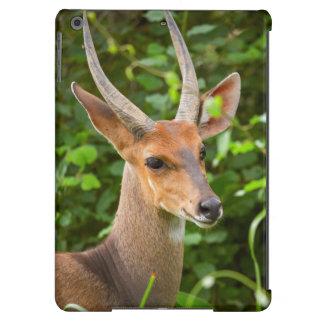 Bushbuck (Tragelaphus Scriptus), Kruger National 2 iPad Air Case