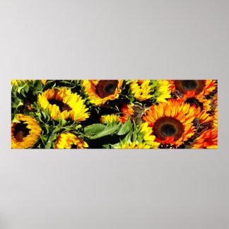 Bushel of Sunflower Poster