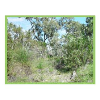 Bushland en el parque de Tamala Tarjetas Postales