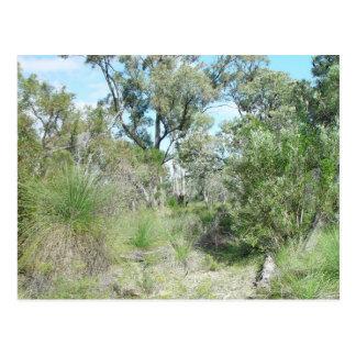 Bushland en el parque de Tamala Postales