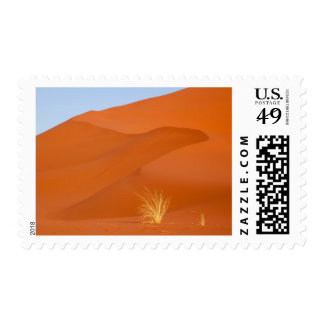 Bushman's grass and red sand dune postage stamp