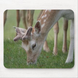 Bushy Park Deer Mousepad