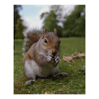Bushy Park Squirrel, by Gary Dorking Poster