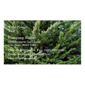 Bushy pine tree for background business card templates