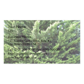 Bushy pine tree for background business card