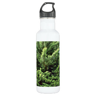 Bushy pine tree for background stainless steel water bottle