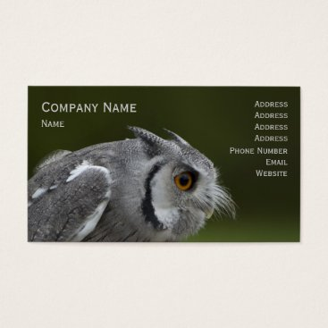 Professional Business Business Card - Baby Grey Owl