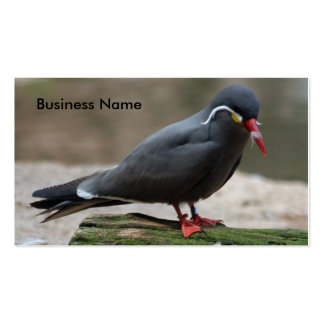 Business Card  Bronx Zoo 193 -Bird