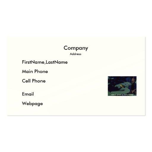 Business Card / Bullfrog