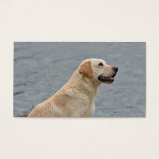 Business Card Picture for Dog Services