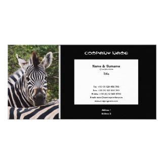Business card profile zebra safari customize photo cards