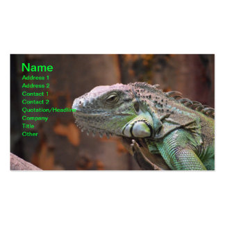 Business Card with colourful Iguana Lizard