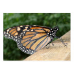 Business Cards - Monarch Butterfly