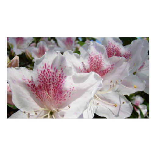 Business Cards White Pink Azalea Flowers