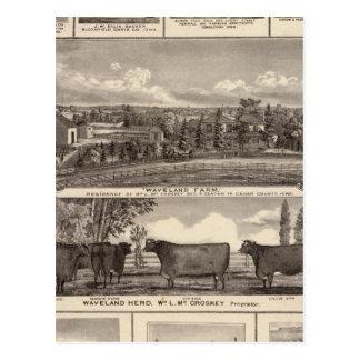Businesses, residences, Cedar County Postcard
