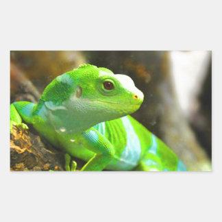 Busque el reptil del lagarto de la iguana del amor pegatina rectangular