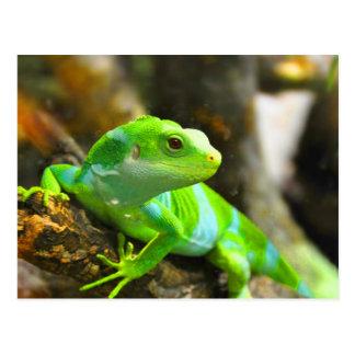 Busque el reptil del lagarto de la iguana del amor tarjetas postales