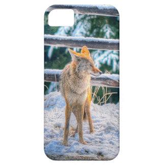 Búsqueda de arte femenino de la foto del coyote y iPhone 5 carcasa