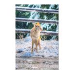 Búsqueda de arte femenino de la foto del coyote y impresión en lona