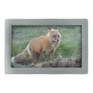 Búsqueda de la foto 2 de la fauna del Fox rojo Hebilla Cinturon Rectangular