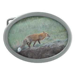 Búsqueda de la foto de la fauna del Fox rojo Hebillas Cinturon Ovales