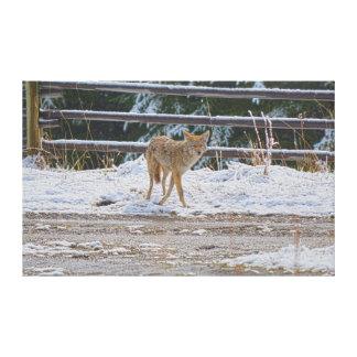 Búsqueda de la foto femenina 5 del coyote y de la lona envuelta para galerias
