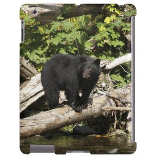 Búsqueda de la foto salvaje de la fauna del oso