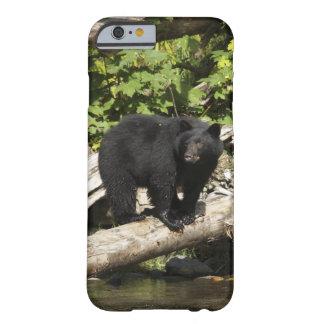 Búsqueda de la foto salvaje de la fauna del oso funda barely there iPhone 6