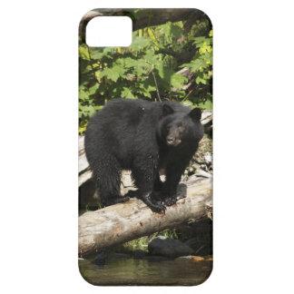 Búsqueda de la foto salvaje de la fauna del oso funda para iPhone SE/5/5s