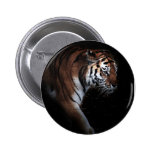 Búsqueda de los tigres pin