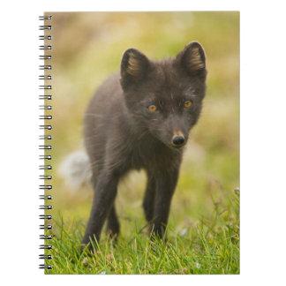 Búsquedas del zorro ártico para la comida note book