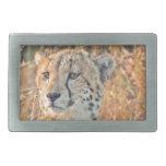 Búsquedas surafricanas del guepardo para la comida hebilla de cinturon rectangular