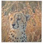 Búsquedas surafricanas del guepardo para la comida servilletas imprimidas