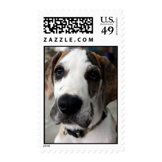 Buster 1 stamp