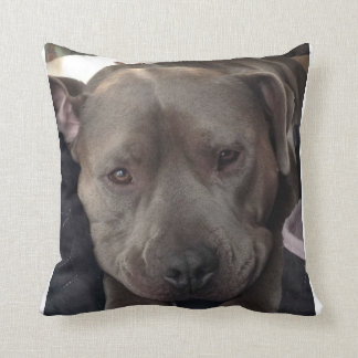 Buster Blue of The Shaggy Shack Pack Pillows