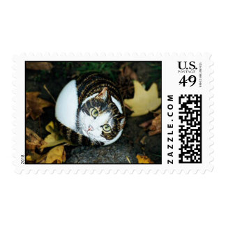 """""""Buster"""" cat rock stamp"""