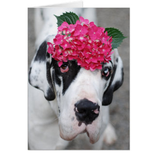 Buster Great Dane Card