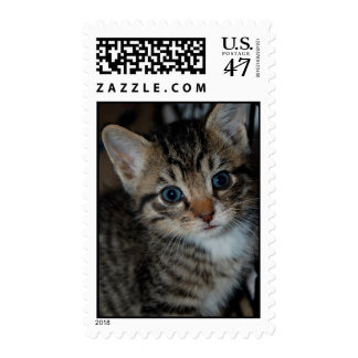 Buster Postage