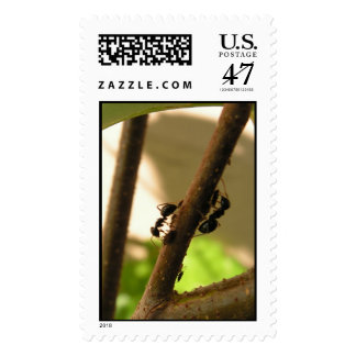 Busy ants postage stamp