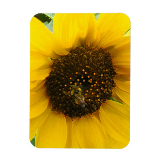 Busy Bee Accented Edges Magnet