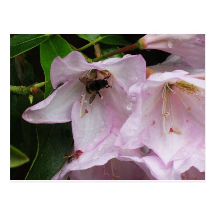 Busy Bee Between Rain Showers Postcard