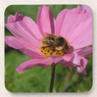 Busy Bee on Cosmo Beverage Coaster