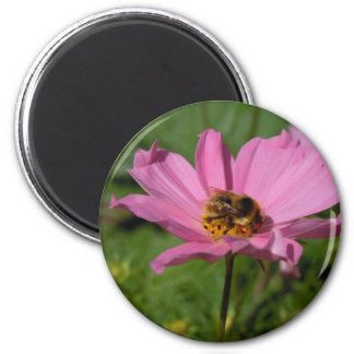 Busy Bee on Cosmo Magnet