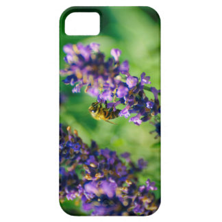 Busy bee on lavender flower iPhone SE/5/5s case